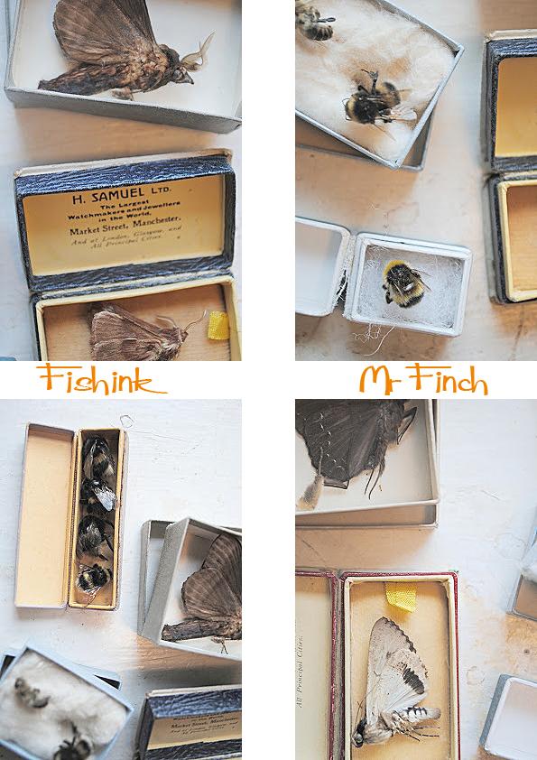 Fishinkblog 5692 Mr Finch 3