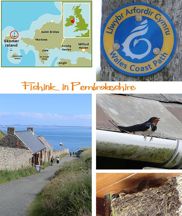 Fishinkblog 6202 Pembrokeshire 2