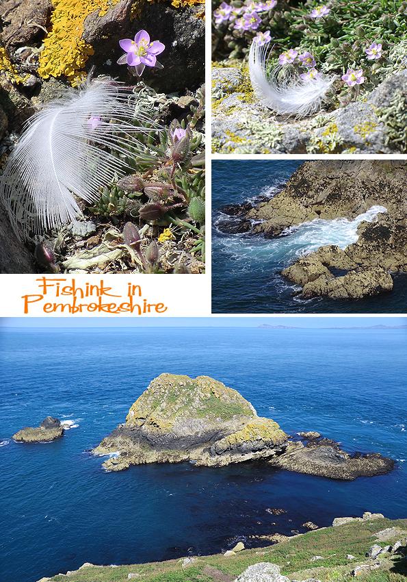 Fishinkblog 6210 Pembrokeshire 10
