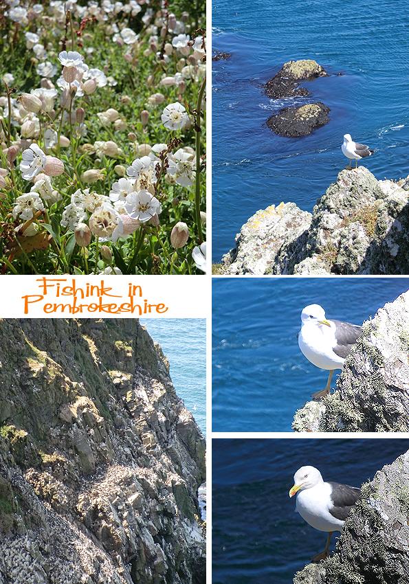 Fishinkblog 6211 Pembrokeshire 11
