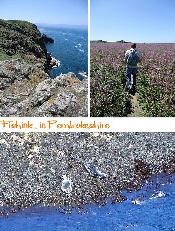 Fishinkblog 6212 Pembrokeshire 12