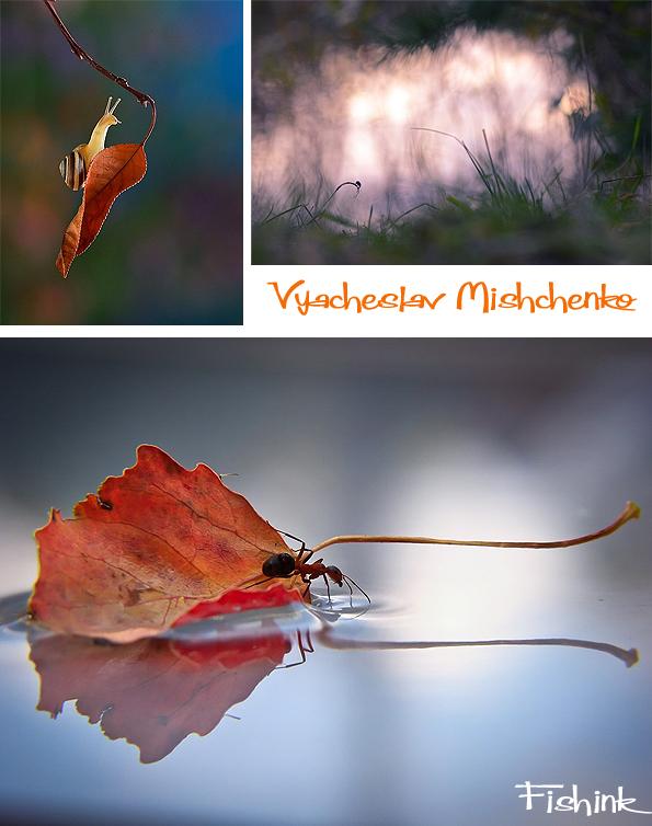 Fishinkblog 7495 Vyacheslav Mishchenko 2