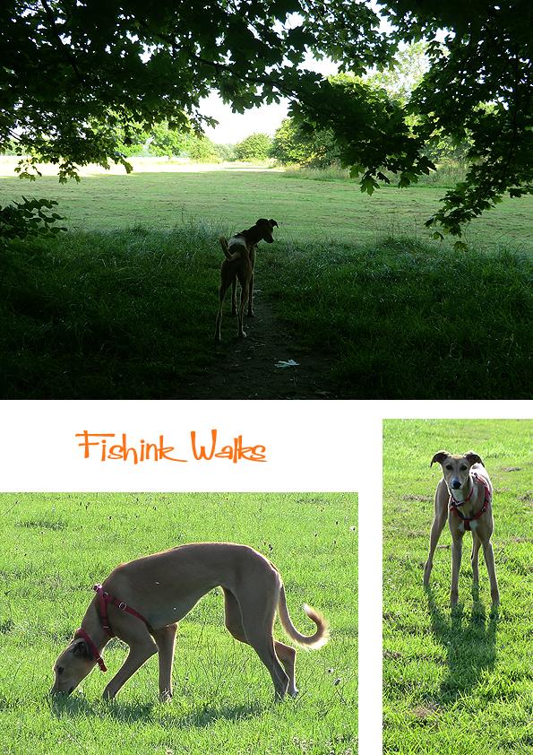 Fishinkblog 7877 Fishink Walks 2