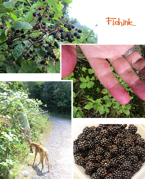 Fishinkblog 7962 Fishink Blackberrying 2